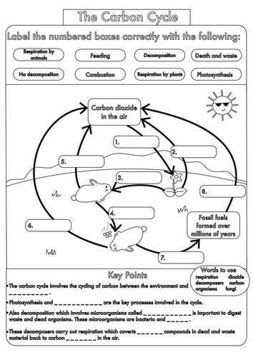 Worksheet Carbon Cycle Worksheets gcse carbon cycle worksheets and a3 wall posters by beckystoke worksheet black white pdf