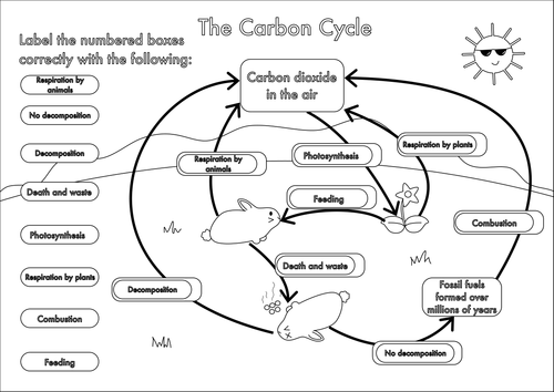 Worksheets The Carbon Cycle Worksheet collection of the carbon cycle worksheet sharebrowse gcse a4 poster to label by beckystoke teaching