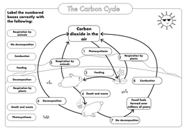 GCSE Carbon Cycle A4 poster to label (sample worksheet ...