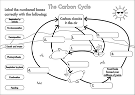 GCSE Carbon Cycle A4 poster to label by beckystoke ...