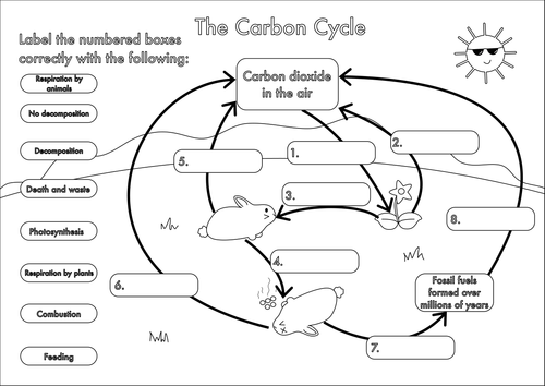 GCSE Carbon Cycle A4 poster to label by beckystoke Teaching – Biology Worksheets Pdf