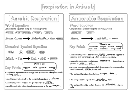 GCSE Worksheet on Respiration by beckystoke - Teaching Resources - TES
