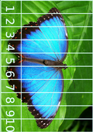 27butterfly-puzzle-cards.PDF