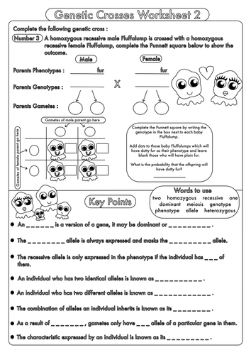 Worksheet High School Biology Worksheets Pdf high school biology inheritance and genetic crosses by beckystoke gcse worksheet 2 pdf