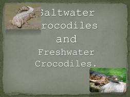 Fresh and Salt Water Crocodile PowerPoint