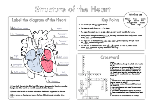 Biology GCSE Revision Circulation Worksheet Pack by beckystoke – Structure of the Heart Worksheet Answers