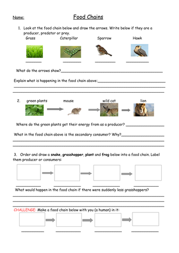 Worksheet Food Chains Worksheet food chains full lesson with worksheets plan and web ha worksheet pdf