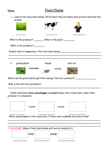 Worksheet Food Chains Worksheet food chains full lesson with worksheets plan and web la worksheet pdf