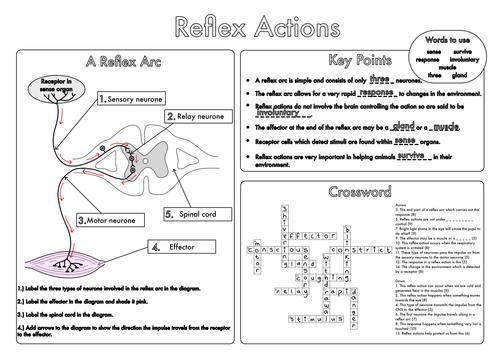 Bumper GCSE Biology Worksheet Pack by beckystoke Teaching – Biology Worksheets Pdf