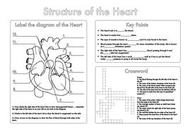 Milliliters And Liters Worksheet Word Bumper Gcse Biology Worksheet Pack By Beckystoke  Teaching  Reflective Symmetry Worksheets with Percentile Worksheet Pdf Gcseheartstructureworksheetpdf  Angles Worksheet Grade 7