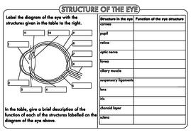 GCSE-Structure-of-the-Eye-Worksheet-1.pdf