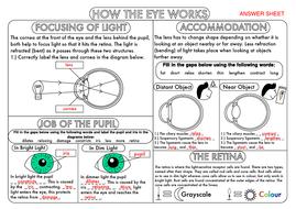 GCSE-How-the-Eye-Works-Worksheet-2.pdf