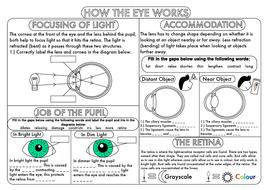 GCSE-How-the-Eye-Works-Worksheet-1.pdf