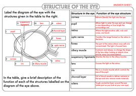 GCSE-Structure-of-the-Eye-Worksheet.pdf