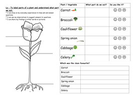 year 1 plants and growing unit science by keiramccosh teaching resources. Black Bedroom Furniture Sets. Home Design Ideas