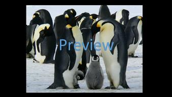 preview-animal-photos-01.jpg