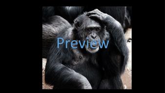 preview-animal-photos-14.jpg