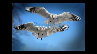 preview-animal-photos-15.jpg
