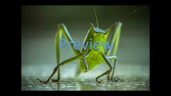 preview-animal-photos-20.jpg