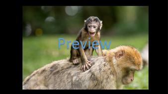 preview-animal-photos-08.jpg