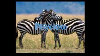 preview-animal-photos-04.jpg