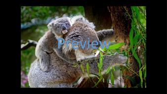 preview-animal-photos-18.jpg