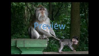 preview-animal-photos-19.jpg