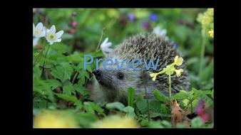 preview-animal-photos-09.jpg