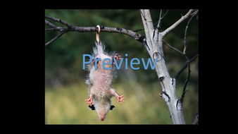 preview-animal-photos-02.jpg