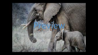 preview-animal-photos-12.jpg