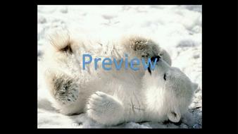 preview-animal-photos-05.jpg