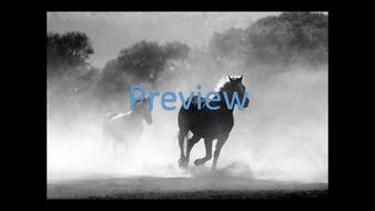 preview-animal-photos-17.jpg