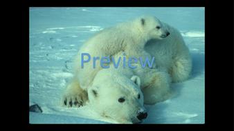 preview-animal-photos-07.jpg