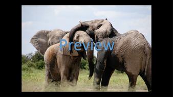 preview-animal-photos-06.jpg
