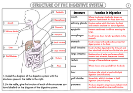 Gcse Biology Digestion Topic Resource Pack Updated By Beckystoke