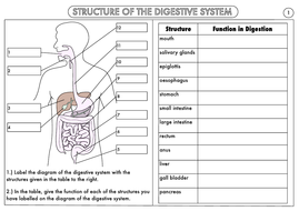 GCSE-Digestive-System-Structure-and-Function-Worksheet.pdf