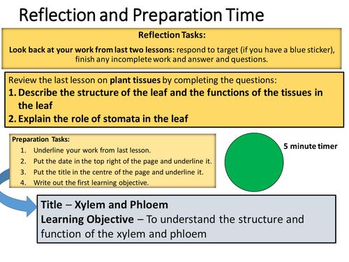 Xylem Phloem and Transpiration by Shimazu2 Teaching Resources Tes – Xylem and Phloem Worksheet