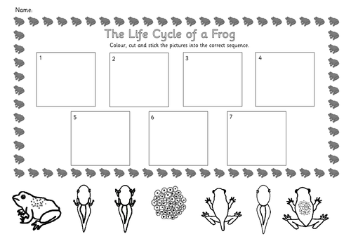 Life Cycles - From Tadpole to Frog Topic Pack by jessplex ...