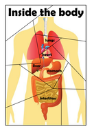 Internal organs jigsaw by choralsongster teaching resources tes inside the body jigsawpdf ccuart Images