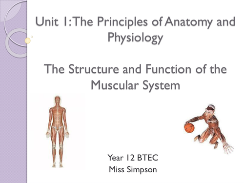 Level 3 BTEC Sport - Unit 1 - Principles of Anatomy and Physiology ...