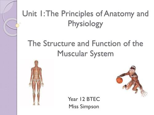 Niedlich Level 3 Anatomy And Physiology Ideen - Anatomie und ...