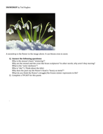 Snowdrop By Ted Hughes Poetry Analysis Worksheet