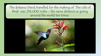 david-attenborough-preview-slide-18.pdf
