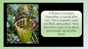 david-attenborough-preview-slide-15.pdf