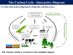 162 the carbon cycle by rgeorge15 teaching resources tes png slide021 ccuart Choice Image