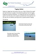 Tagging-Salmon.pdf