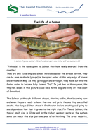 The-Life-of-a-Salmon.pdf