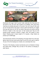 Life-of-a-Grayling.pdf