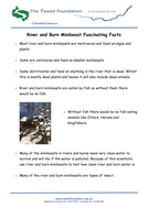 River-and-Burn-Minibeast-Fascinating-Facts.pdf