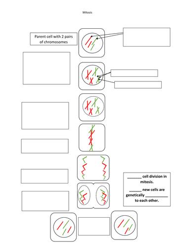 Printables Meiosis Worksheet meiosis worksheet pdf pichaglobal syndeomedia